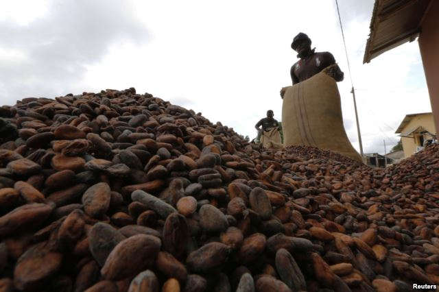 Cocoa beans niable