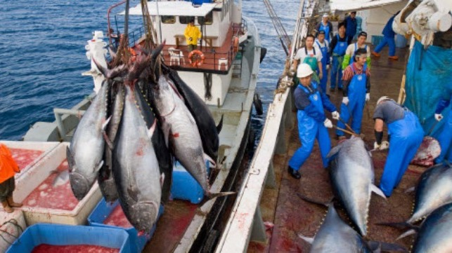 tuna fishing credit business and human rights resource centre.789899